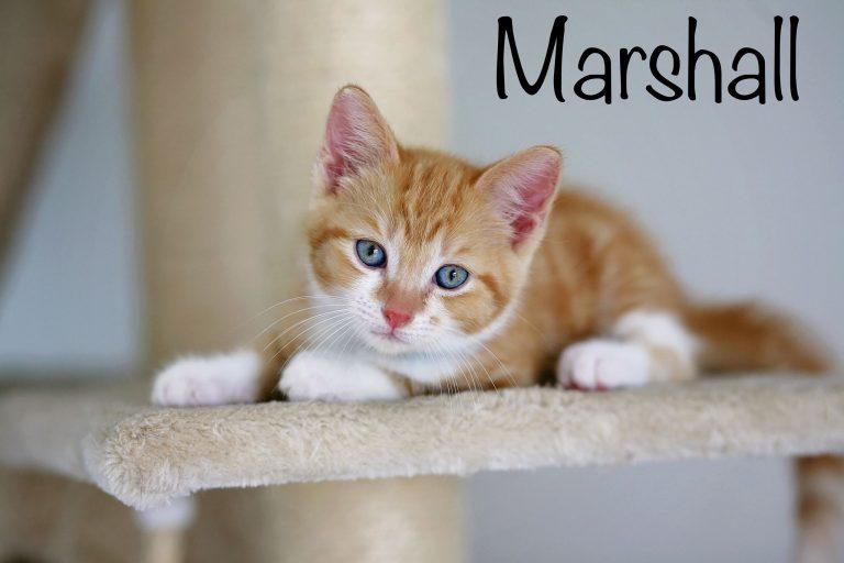 MARSHALL ADOPTED