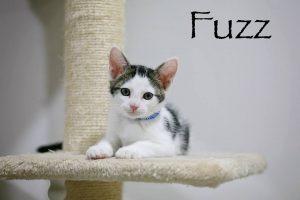 fuzz.