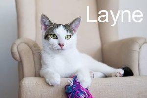 layne1