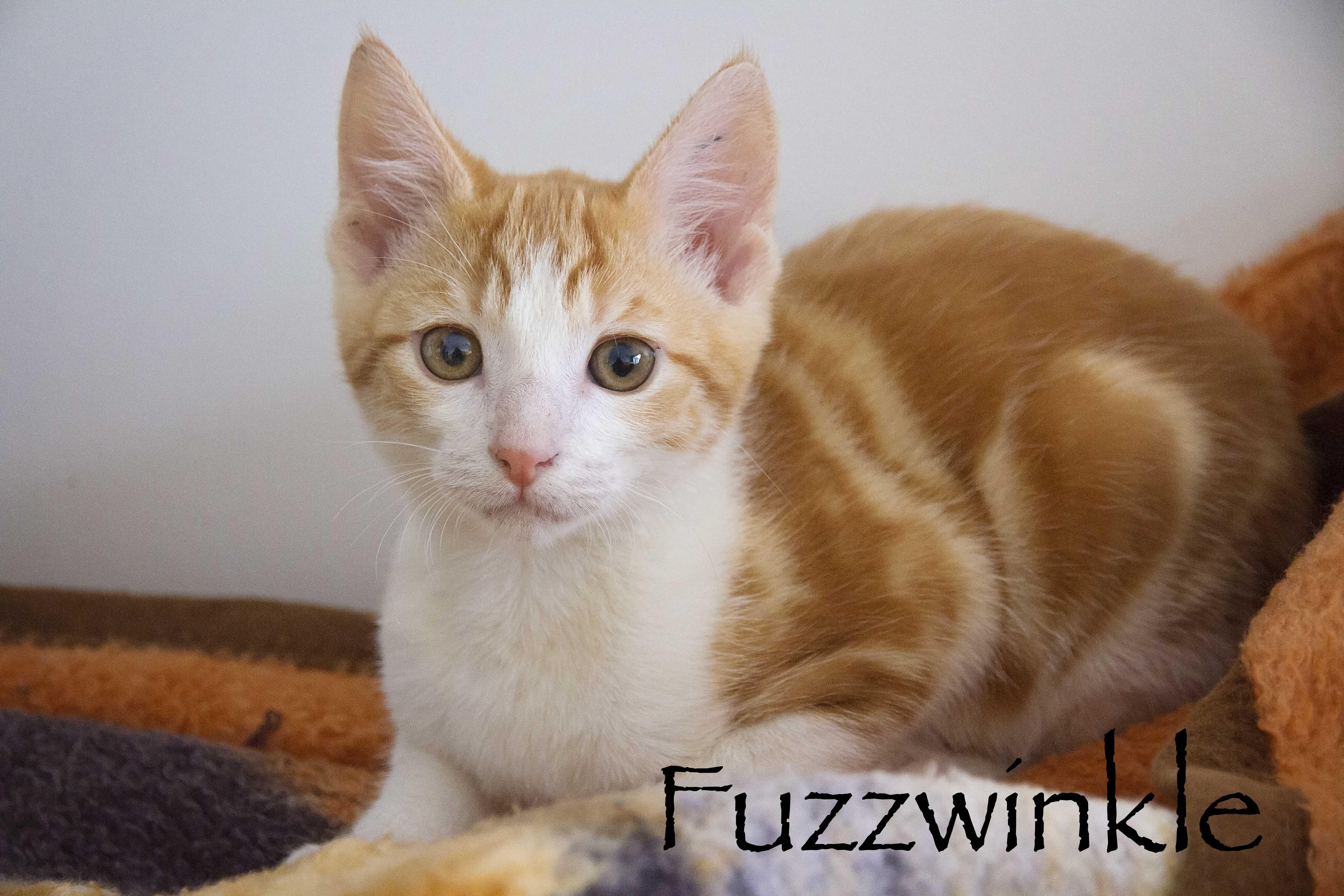 Fuzzwinkle