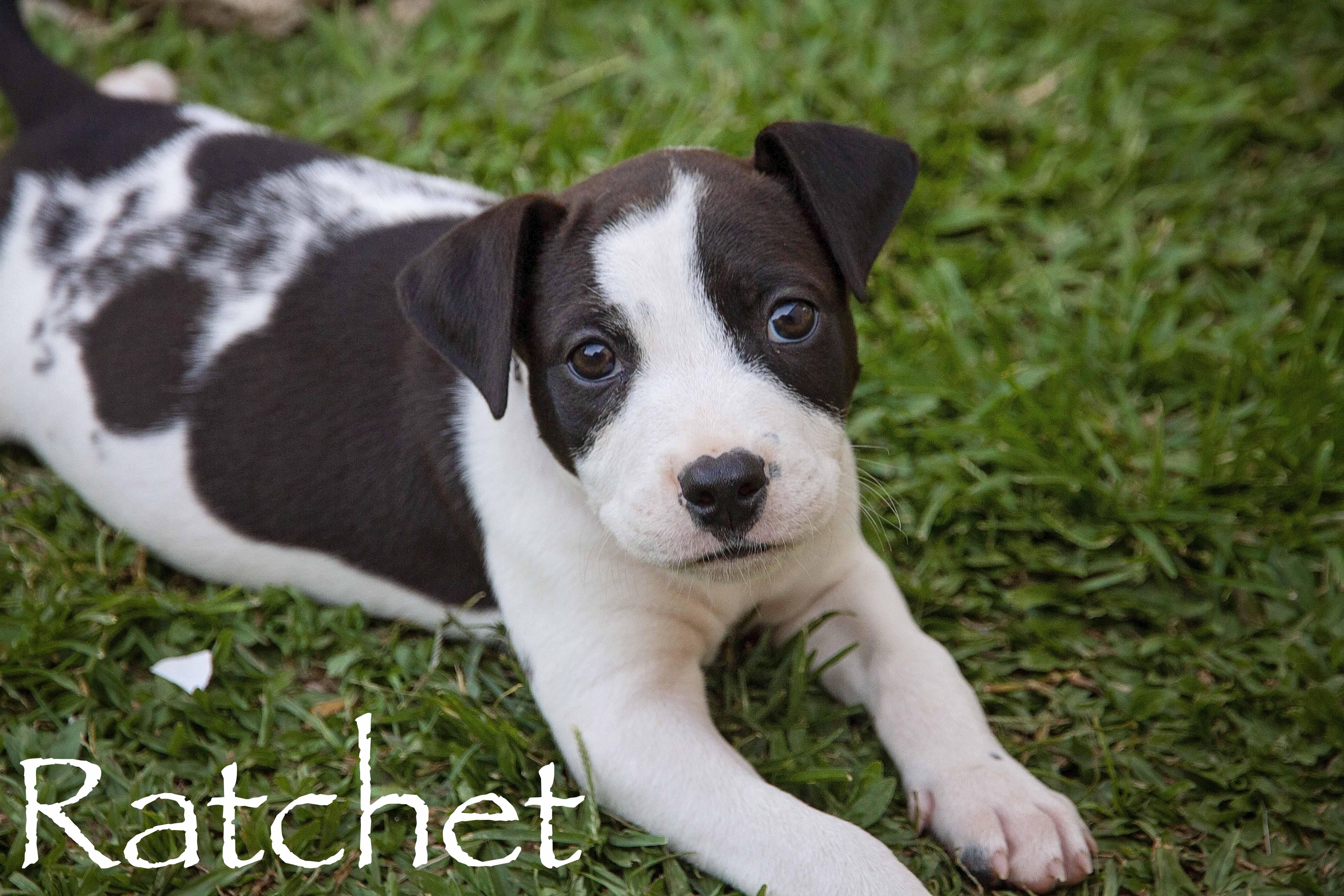 Rachett
