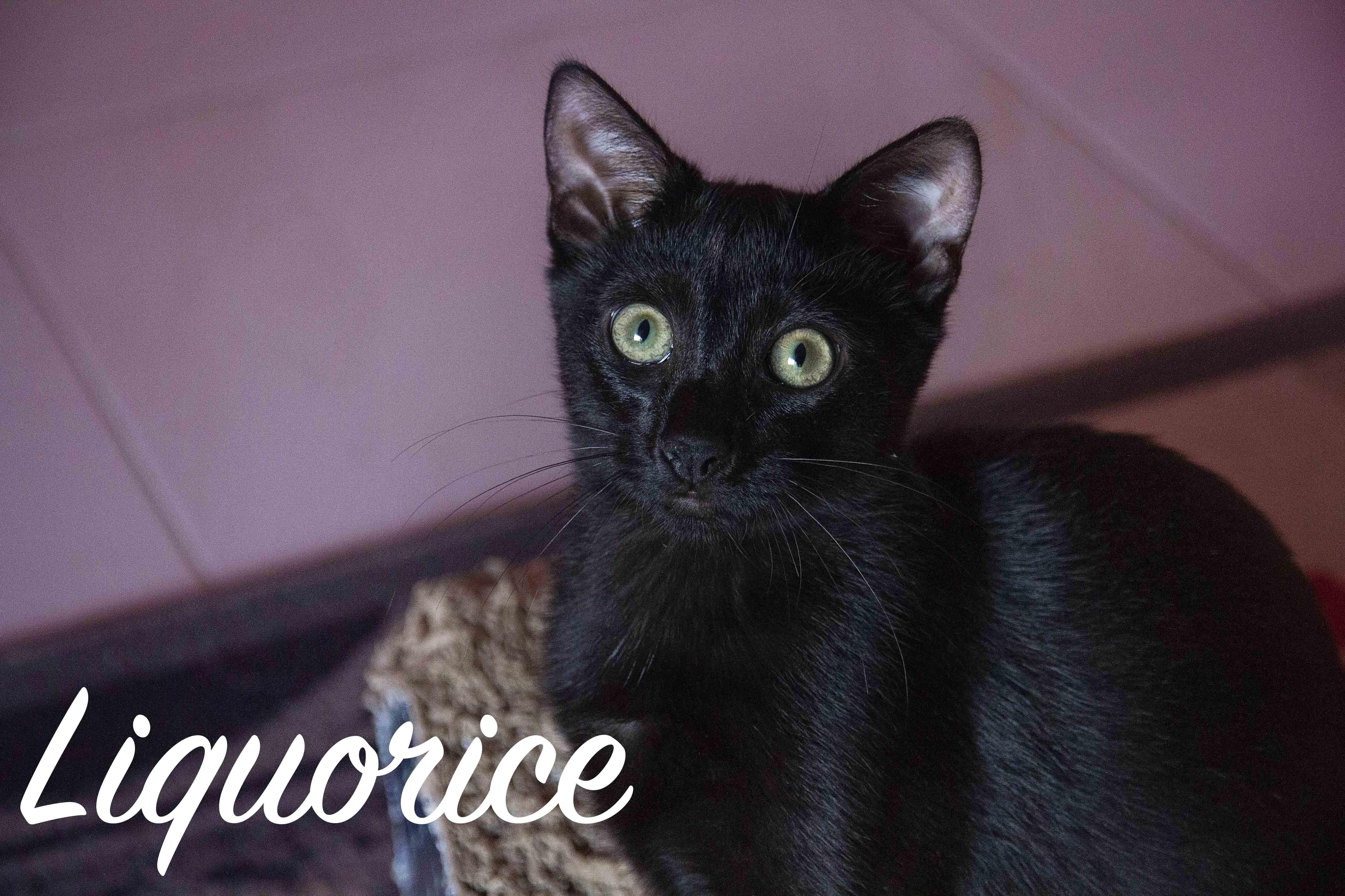 Liqourice
