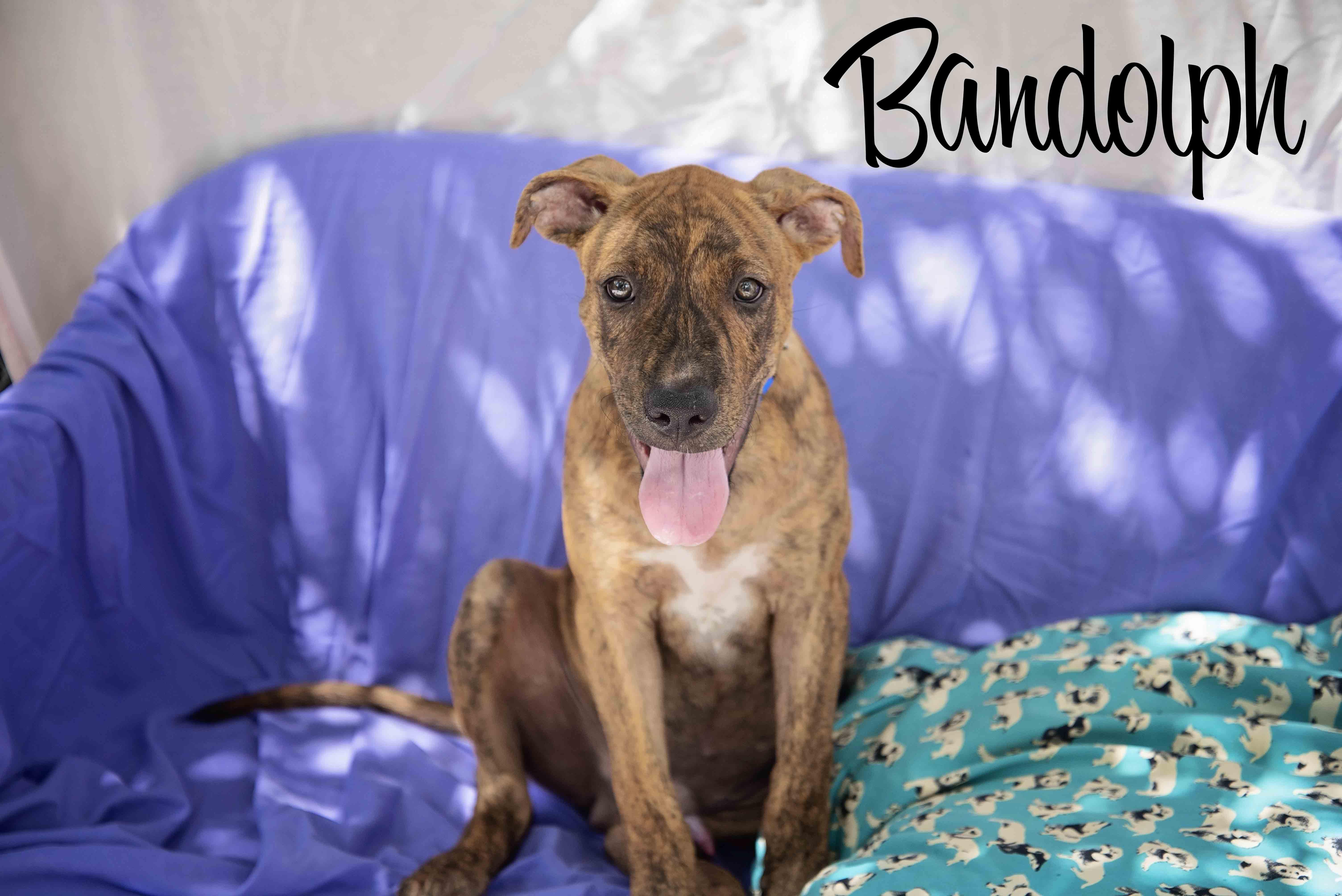 Bandolph