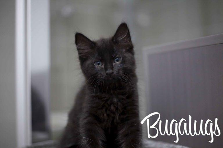Bugalugs