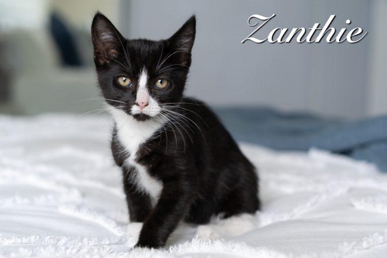 Zanthie