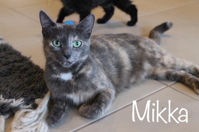 Mikka
