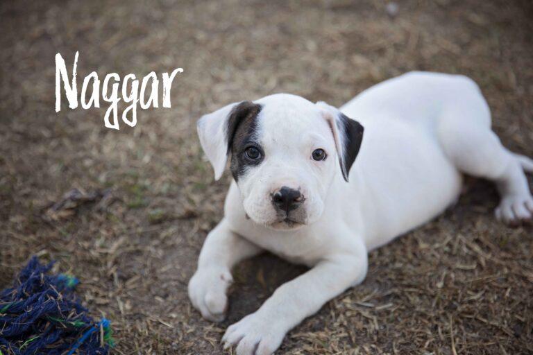 Naggar