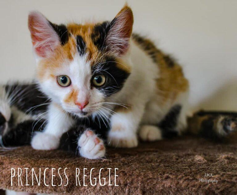 Princess Reggie