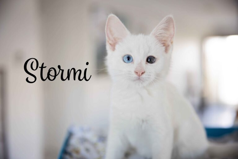 Stormi