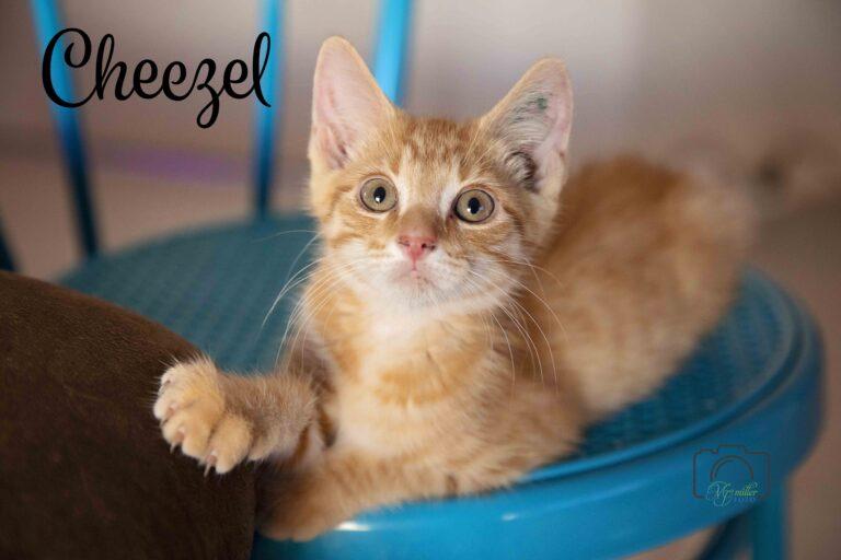 Cheezel
