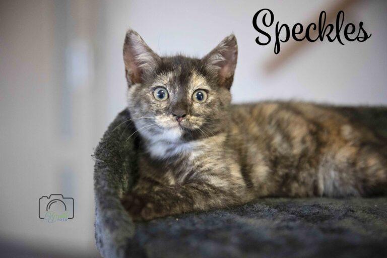 Princess Speckles