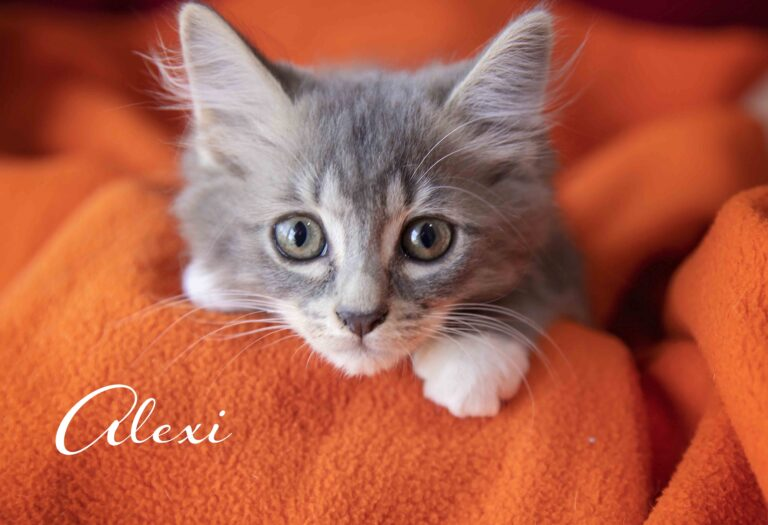 Alexi